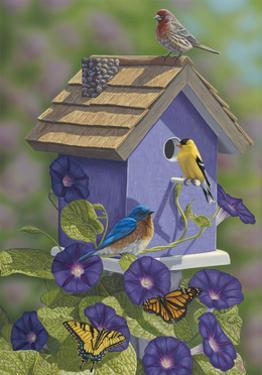 Primarys Butterflies by Jeffrey Hoff