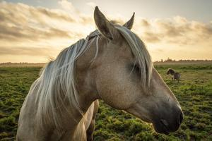 Profile of a Horse, Close-Up, with a Mini Horse in the Background by Jeffrey Schwartz