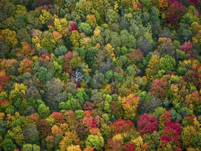 Aerial View of Fall Colors in a Deciduous Forest, Huron-Manistee National Forest, Michigan, USA