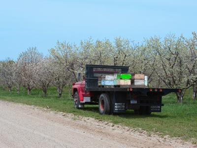 Bee Hives on a Flat Bed Truck Parked Near a Cherry Orchard in the Spring