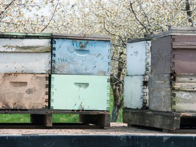 Bee Hives on Flat Bed Truck Parked Near a Cherry Orchard