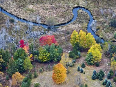 Meandering Stream in Through a Forest and Wetland Habitat in the Fall, Michigan, USA