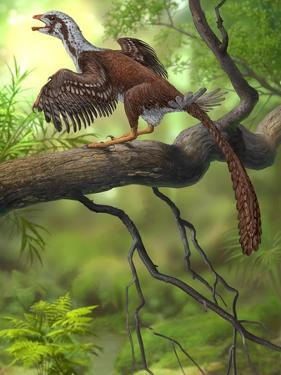 Jeholornis Prima Perched on a Tree Branch During the Early Cretaceous Period