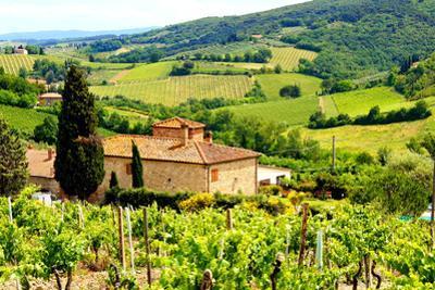 Classic Tuscan Landscape by Jeni Foto