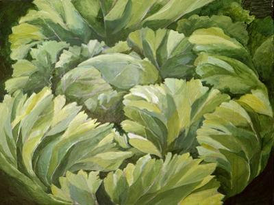 Cabbage, 2013 by Jennifer Abbott