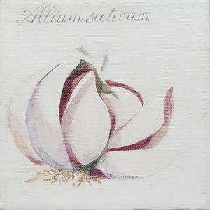 Garlic Cloves by Jennifer Abbott