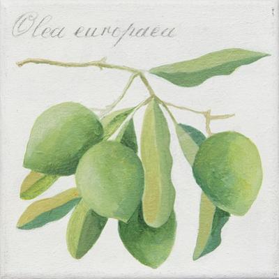 Green Olives by Jennifer Abbott
