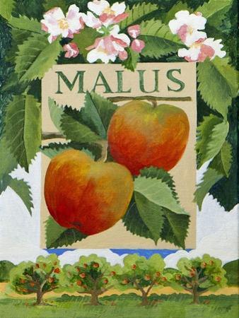 Malus (Apple), 2014 by Jennifer Abbott