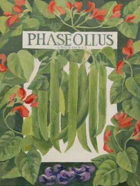 Phaseollus by Jennifer Abbott