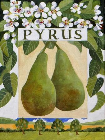 Pyrus (Pear), 2014 by Jennifer Abbott