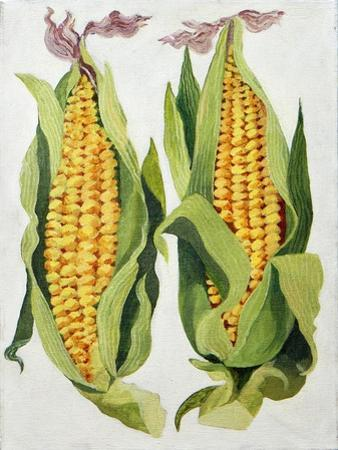 Sweetcorn, 2013 by Jennifer Abbott