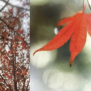 Autumn Leaves I by Jennifer Broussard