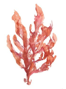 Coral Kelp I by Jennifer Goldberger
