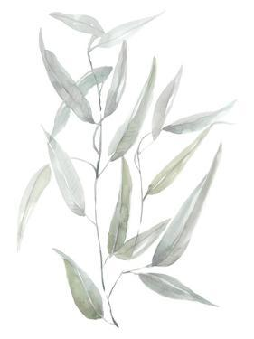 Ethereal Eucalyptus I by Jennifer Goldberger
