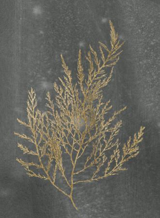 Gold Foil Algae II on Black by Jennifer Goldberger