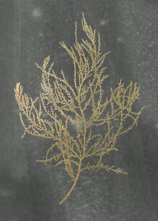 Gold Foil Algae III on Black by Jennifer Goldberger