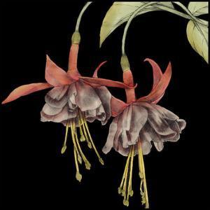 Graphic Fuchsia I by Jennifer Goldberger