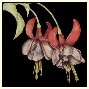Graphic Fuchsia II by Jennifer Goldberger