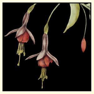 Graphic Fuchsia III by Jennifer Goldberger