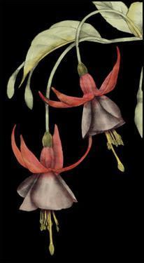 Graphic Fuchsia V by Jennifer Goldberger