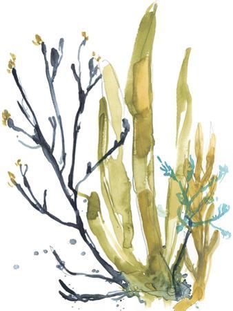 Reef Illusion I by Jennifer Goldberger