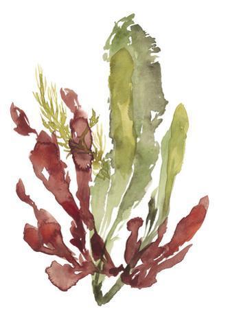 Seaweed Garden II by Jennifer Goldberger