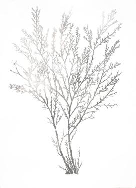 Silver Foil Algae I by Jennifer Goldberger