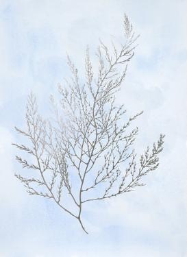 Silver Foil Algae II on Blue by Jennifer Goldberger