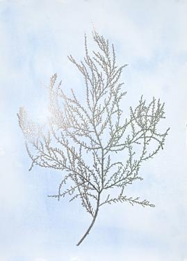 Silver Foil Algae III on Blue by Jennifer Goldberger