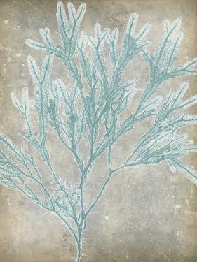 Spa Seaweed I by Jennifer Goldberger