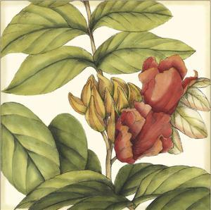 Tropical Blooms and Foliage III by Jennifer Goldberger