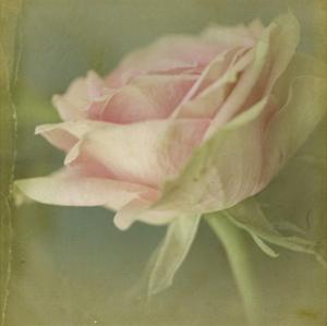 Dream in Pink VI by Jennifer Jorgensen