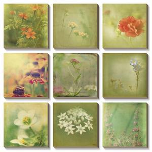 Filtered Dreams by Jennifer Jorgensen