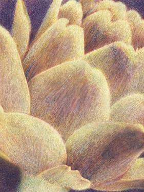 Artichoke by Jennifer Kennard