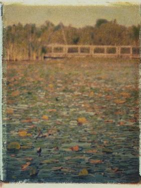 Foster Island Lily Pads by Jennifer Kennard