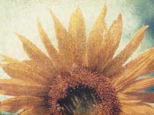 Sunflower by Jennifer Kennard