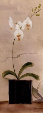 Asian Orchid II by Jennifer Matla