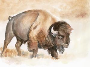 Buffalo Roam II by Jennifer Parker