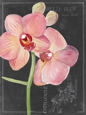 Chalkboard Flower I by Jennifer Parker
