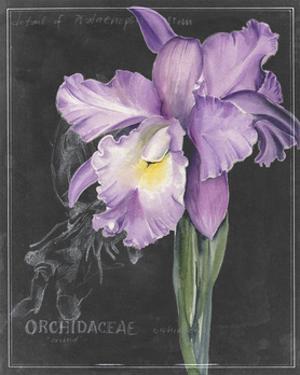 Chalkboard Flower II by Jennifer Parker