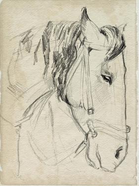 Horse in Bridle Sketch I by Jennifer Parker