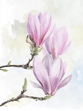 Magnolia Blooms I by Jennifer Parker