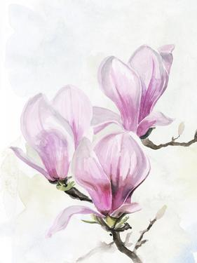 Magnolia Blooms II by Jennifer Parker