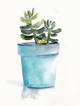 Potted Succulent II by Jennifer Parker