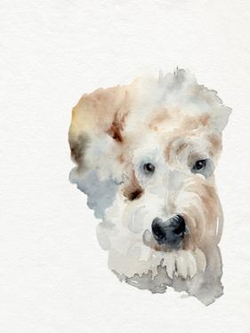 Scruffy Puppy I by Jennifer Parker