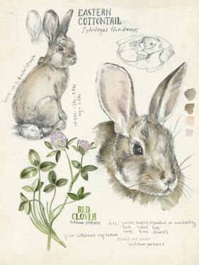 Wildlife Journals II by Jennifer Parker