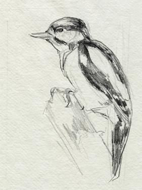 Woodpecker Sketch I by Jennifer Parker