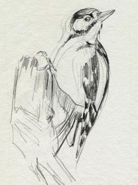 Woodpecker Sketch II by Jennifer Parker