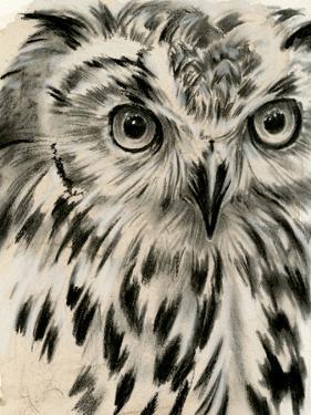 Charcoal Owl I by Jennifer Paxton Parker