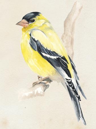 Little Bird on Branch III by Jennifer Paxton Parker